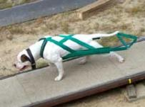 Green Weight Pull Harness