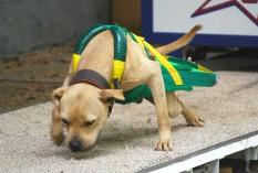 Green/Yellow Weight Pull Harness