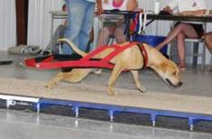 Red Weight Pull Harness